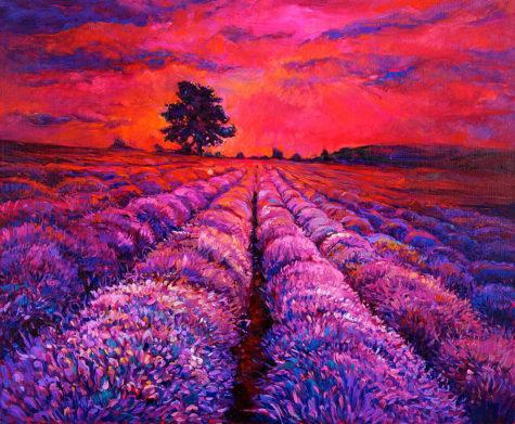 21-lavender-fields-boyan-dimitrov