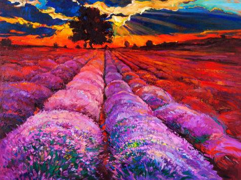 5-lavender-fields-boyan-dimitrov