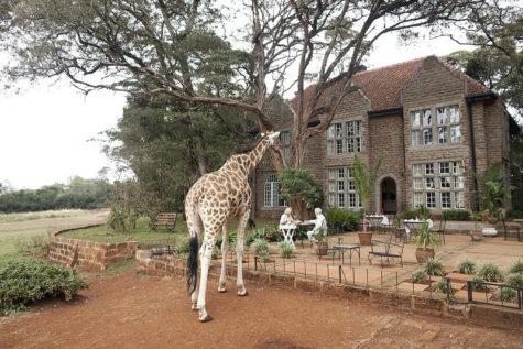 giraffe-manor-hotel-nairobi-kenya-africa-safari-12